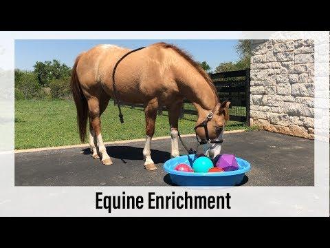 Equine Enrichment Activity