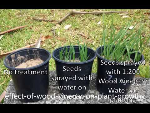 vinegar and plant growth