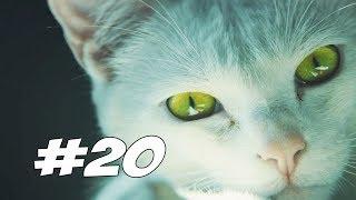 БОСС КОТ - Tom Clancy's Ghost Recon Wildlands - Прохождение #20