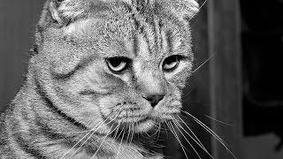 Наш любимый кот 🐱 подстригся и мёрзнет без одеяла))) крутая стрижка кота))