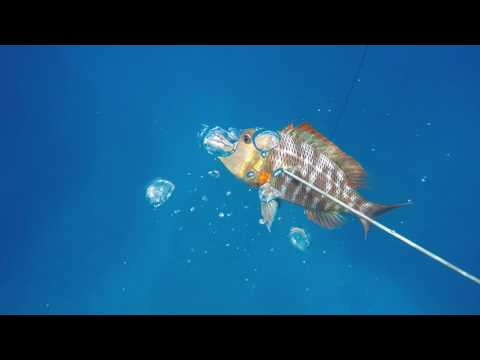 All in a days diving on Norfolk Island...