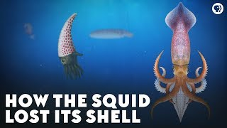 How the Squid Lost Its Shell by : PBS Eons