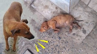 Anguished Mother Dog Desperately Wails Strangers to Save Her Moribund Baby | HeartMelted Reunion!