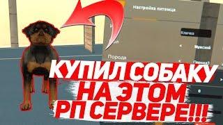 КУПИЛ СОБАКУ НА РП СЕРВЕРЕ В GTA SA! X-Project (МТА)