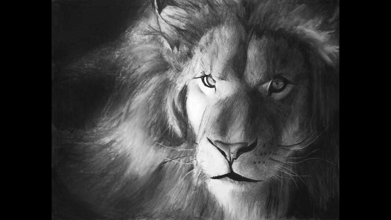 lion speed drawing - cómo dibujar un león (dibujo rápido) - YouTube