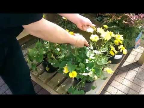 How to Deadhead a Herbaceous Plant with Simon at Bents Garden & Home