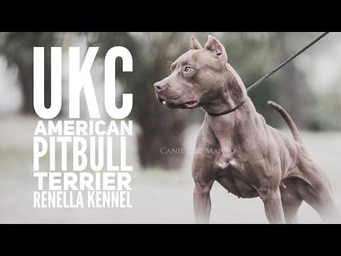 UKC American Pitbull Terrier Züchter Vorstellung - Renella Kennel