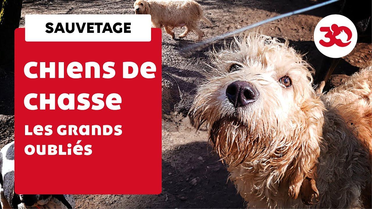 Découverte de 30 chiens de chasse délaissés en forêt