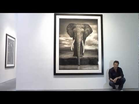 Nick Brandt Photography Exhibition at Hasted Kraeutler Gallery in New York City