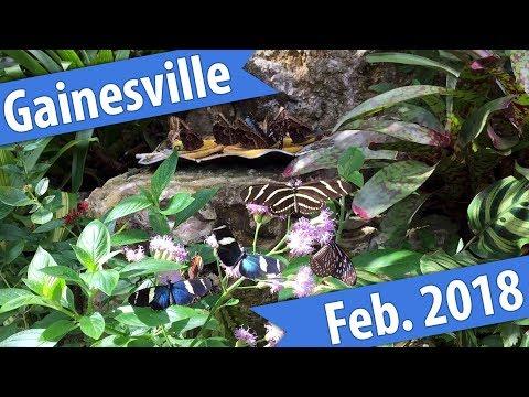 Birds, Bats, & Butterflies - Gainesville February 2018