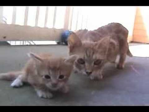 mama cat comes to rescue her little kitten