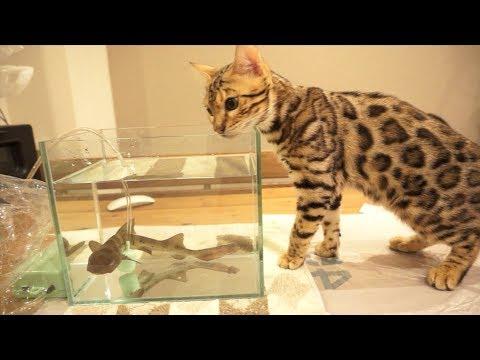 サメvs猫