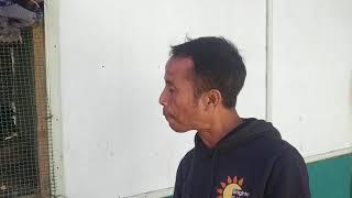 Thangkura vaipa tuai style