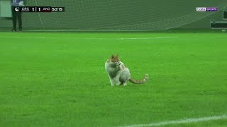 Cat invades pitch as soccer players break Ramadan fast