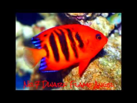 Top 10 Most Beautiful Saltwater Fish