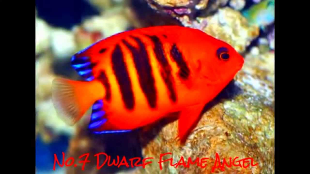 brightly coloured aquarium fish   Reviewwalls.co