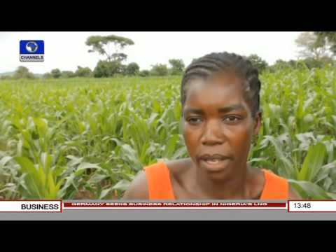 Business Incorporated: Malawi Grapples With Hunger Years After Grain Surplus Pt.3