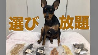 今回はなぁ ミニチュアピンシャー のワイが食べれるおやつ 6種類(砂肝...