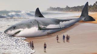 Megalodonun Soyu Büyük Beyaz Köpekbalıkları Yüzünden Tükendi
