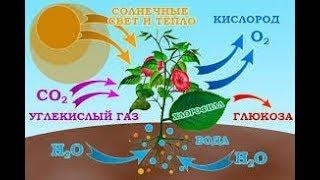 Дыхание растений и животных. Биология 6 класс