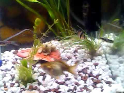 aquarium peru 2000