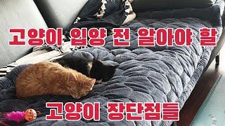 고양이의 장점 & 단점 • 고양이 • 고양이 장…