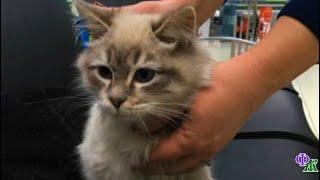 Кошка выбралась из переноски в аэропорту и настойчиво звала на помощь...