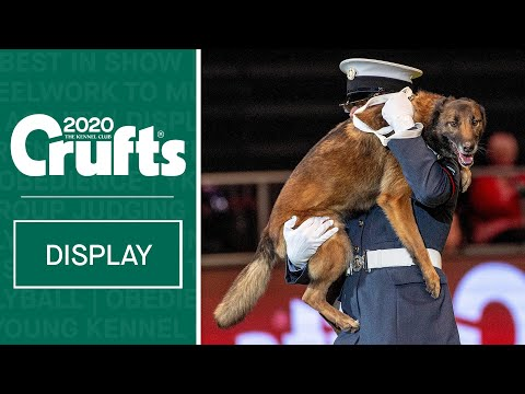 Service dogs in action | RAF Police Dog Display Team perform at Crufts 2020