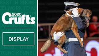 Service dogs in action   RAF Police Dog Display Team perform at Crufts 2020