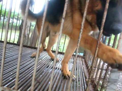 Một Ngày Tại Trại Chó Nghiệp Vụ_2