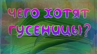 Смешные приколы про Барбоскины без матов !!!!!!!!!!