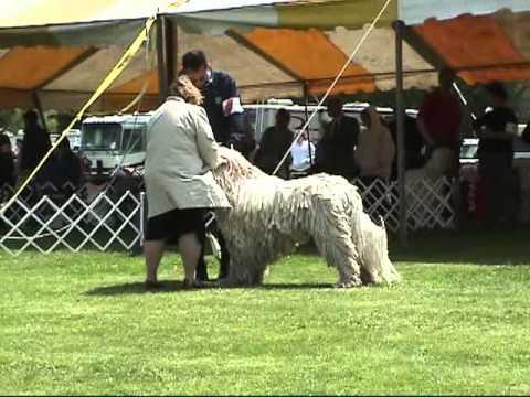 Trenton Kennel Club 2007 - Komondor