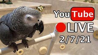 🔴🐦Einstein Parrot LIVE! 2/7/21