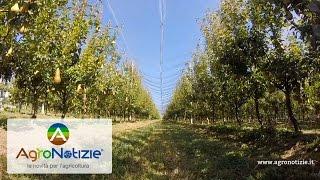 Progetto Pereto Sostenibile - Bayer Crop Science - Fondazione F.lli Navarra - PARTE 1