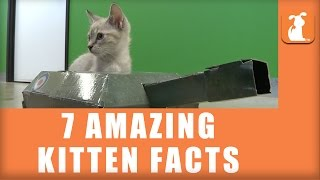 7 More Amazing Kitten Facts!