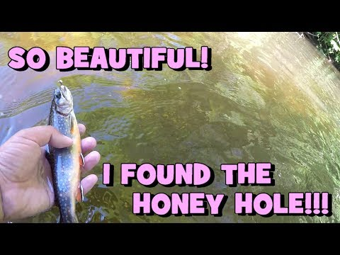 Some Of The MOST BEAUTIFUL TROUT I Have EVER SEEN! Grinding A Creek For New Lifers! -- FINAL PART