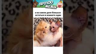 Мемы про Котов за День  Подборка мемов 27 сентября 2021 года