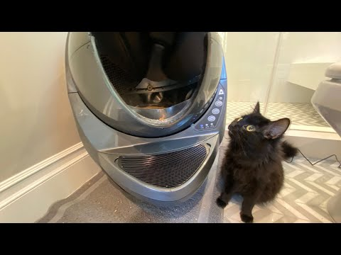 Pregnant Cat Tests World's Most Expensive Litter Box