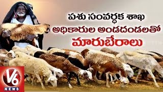 Special Story On Subsidy Sheep Distribution Scam In Mahbubnagar District | V6 News