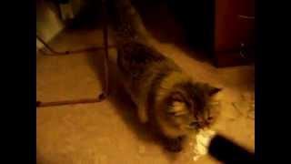 Banshee playing and fetching 2
