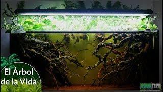 El Árbol de la Vida || AquaTips