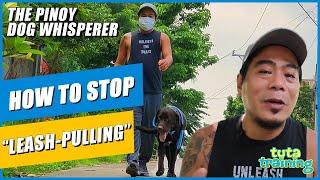 Stop your dog from pulling on leash (Dog training secrets revealed)