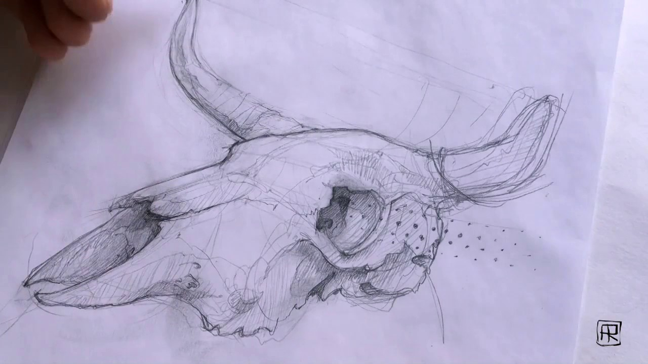 A Cow Skull Drawing