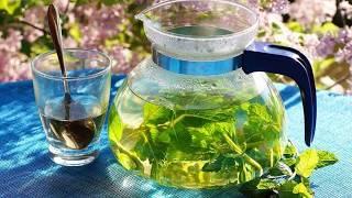 Травы для чая. Заготовка растений, рецепты приготовления чая на основе трав