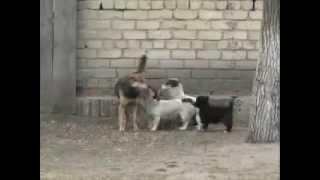 Бродячие собаки. Советы обывателям(Более подробные советы по борьбе с бродячими собаками можно получить на сайте http://vredy.org., 2013-01-21T04:37:06.000Z)
