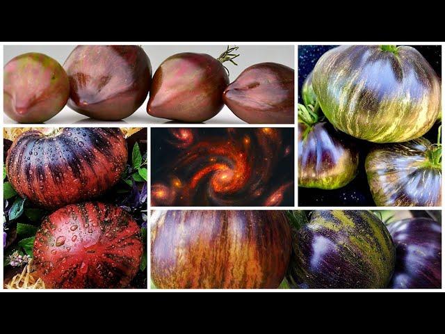 Фантастические сорта томатов. Коллекция - 2022!