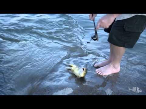 Fishing the Orange River