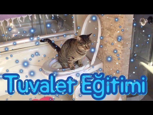 Kedi Tuvalet Eğitimi - Klozete Alıştırıyoruz
