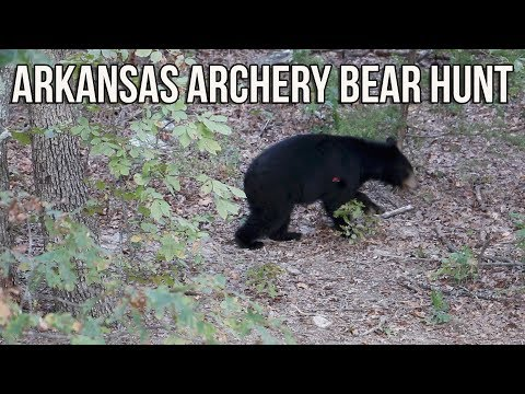 Hunting the toughest bear in Arkansas