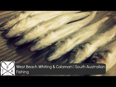 West Beach Whiting and Calamari | South Australian Fishing